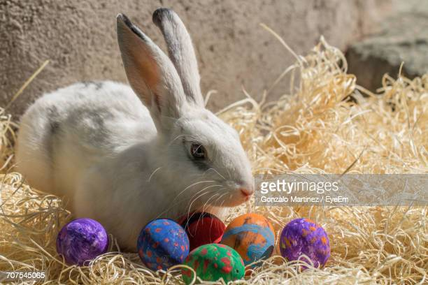 White Rabbit And Easter Eggs