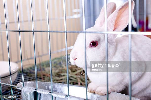 White rabbit for sale. Easter bunny in a cage.