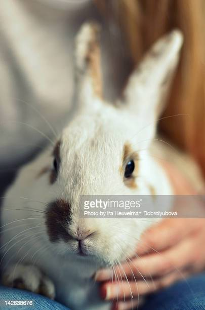 White rabbit in young woman hands