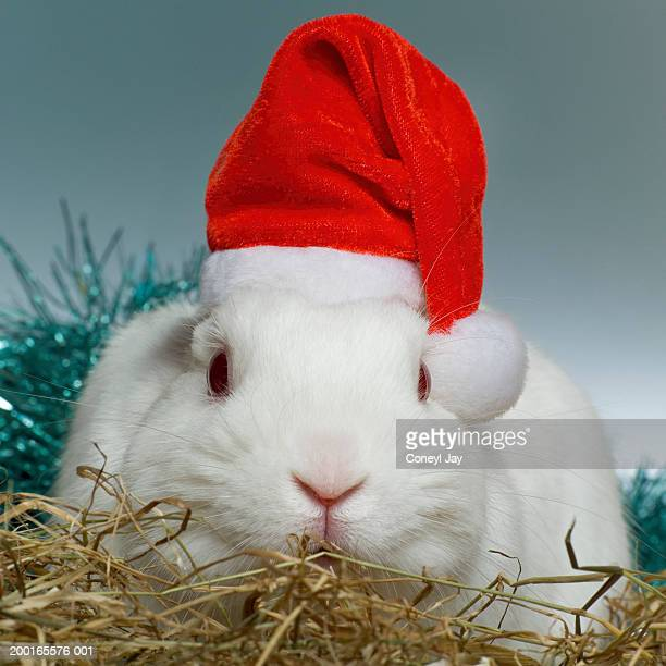 White rabbit wearing Father Christmas hat, close-up
