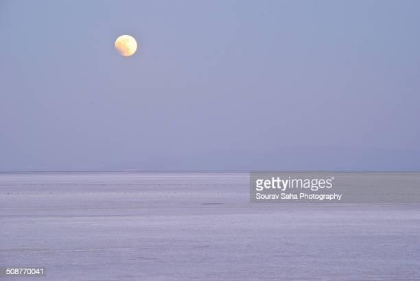 White Rann in Moonlight