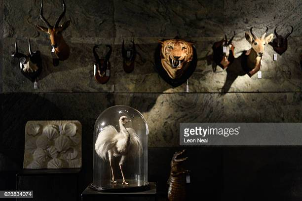 A white Rhea in a glass dome is displayed ahead of it's auction during a press preview on November 17 2016 in Billingshurst England The bird will be...