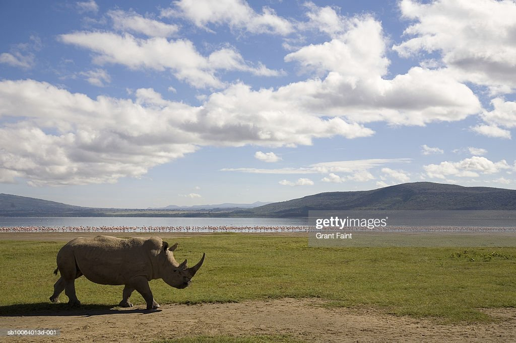 White Rhino With Lake And Hills In Background Stock Photo | Getty Images