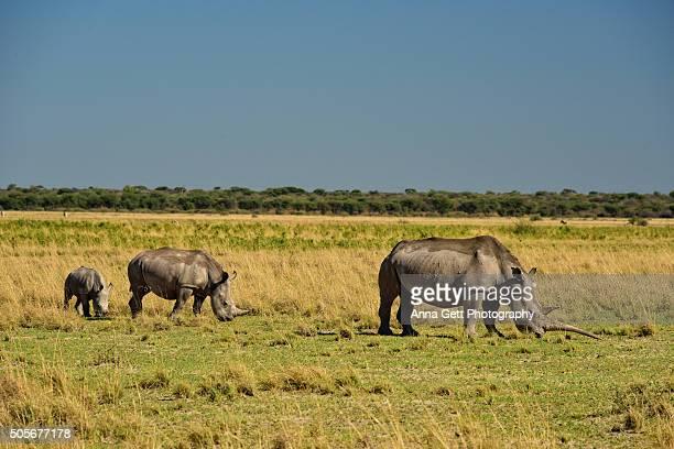 White Rhinoceros family, Khama Rhino Sanctuary