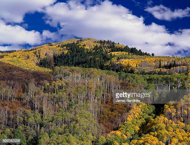 White River National Forest in Autumn