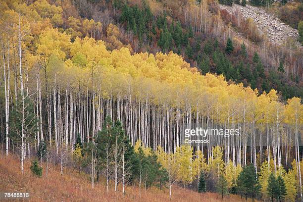 white river national forest - white river national forest stock photos and pictures