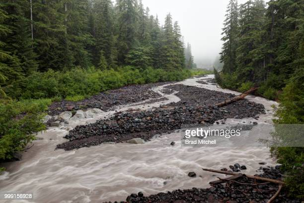 white river running through forest on overcast day, mount rainier national park, washington, usa - brook mitchell stock pictures, royalty-free photos & images