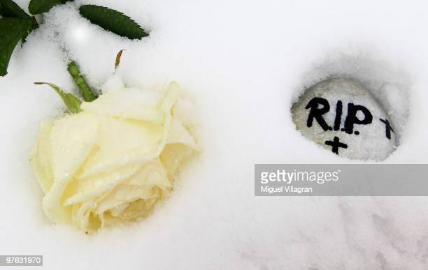 A white rose and a stone with the writing RIP are pictured close to the Albertville School on March 11 2010 in Winnenden Germany Tim Kretschmer...