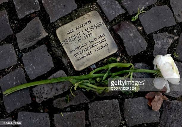 White rose has been laid next to one of the so-called Stolpersteine showing the name of Holocaust victim Benedict Lachmann in Berlin on January 27...