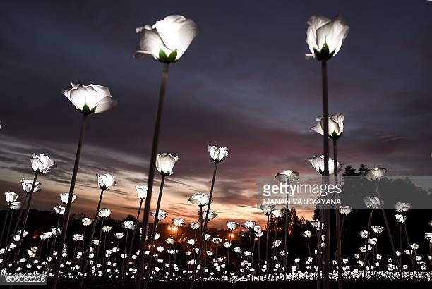 TOPSHOT LED white roses are lit up as the sun sets at the Malaysia Agro Exposition Park in Serdang outside of Kuala Lumpur on September 16 2016 Light...