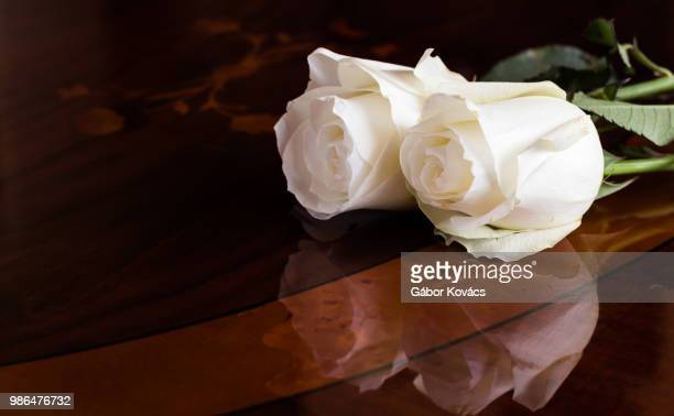white roses - funeral stock pictures, royalty-free photos & images