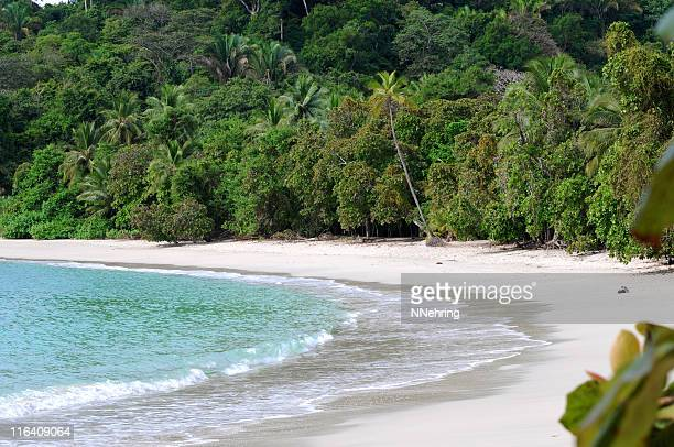 white sand beach with turquoise water and forest beyond