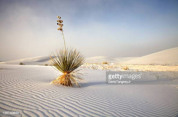 white sands national monument in new mexico - new mexico stock pictures, royalty-free photos & images