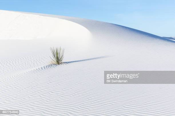 white sands national monument new mexico - nuovo messico foto e immagini stock