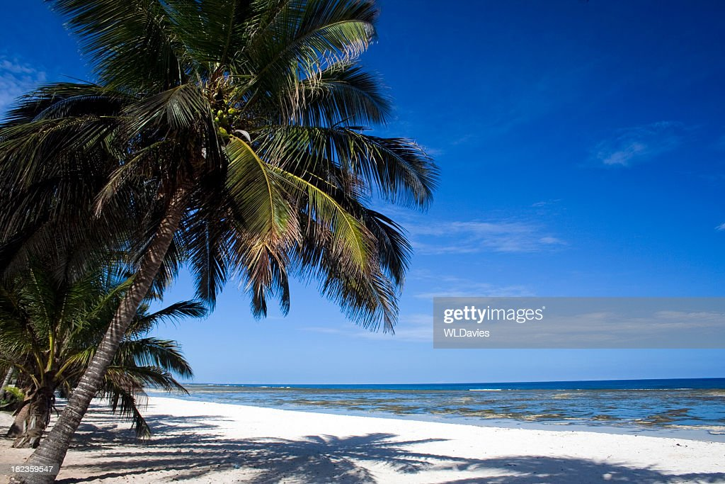 White sandy beach lined with palm trees : Stock Photo