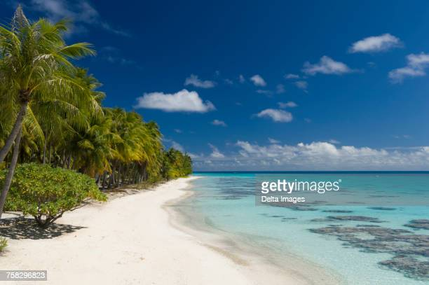 White sandy beach, palm trees and blue sea, Fakarava, Tuamotu Archipelago, French Polynesia