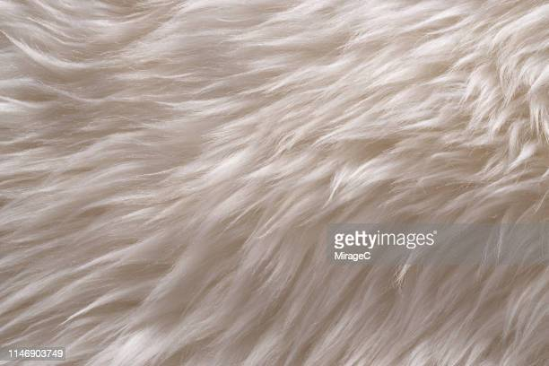 white sheep fur - 毛皮 ストックフォトと画像