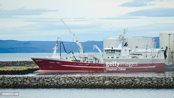 white ship in iceland harbour - brain stem stock photos and pictures