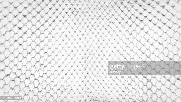 white snake skin, abstrat leather texture for background. - ヘビ柄 ストックフォトと画像