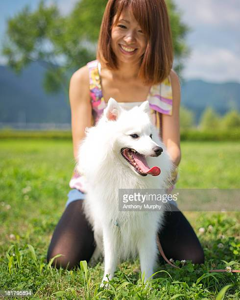 white spitz - japanese spitz stock pictures, royalty-free photos & images