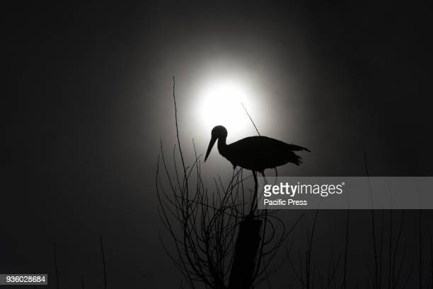 A white stork on a top of a tree in Madrid 40° North latitude where during these days the length of night and day is nearly equal