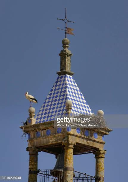 white stork (ciconia ciconia) perched on a blue and white tiled bell tower in trujillo - victor ovies fotografías e imágenes de stock