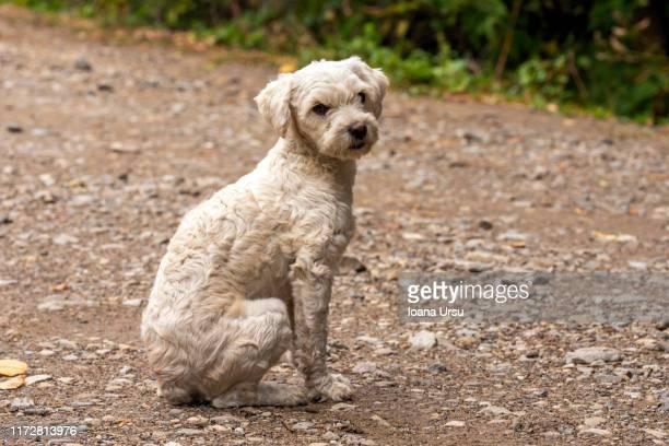 photo beautiful white dog homeless dog