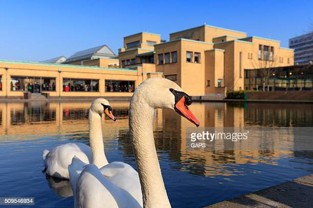 white swans in front of The Hague's Gemeentemuseum