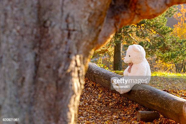 White teddy bear sitting on dead wood in the forest