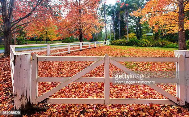 White timber fence and autumn trees