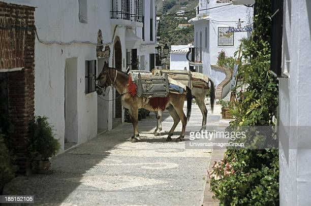 White Towns architectural detail donkey Frigiliana Andalusia Spain