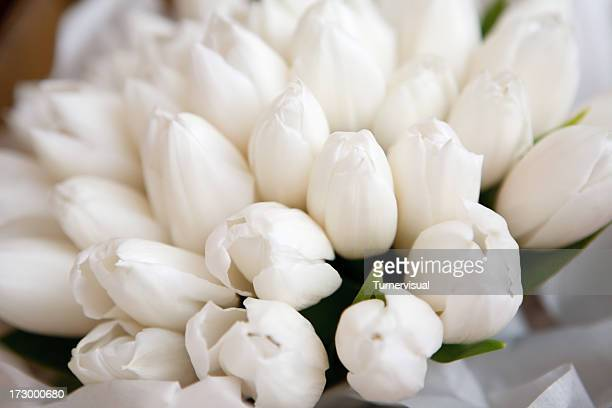 White Tulip Bouquet Detail