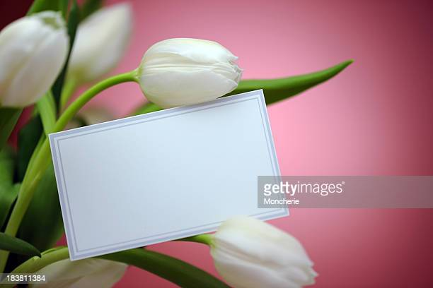 White tulips on pink with an empty card