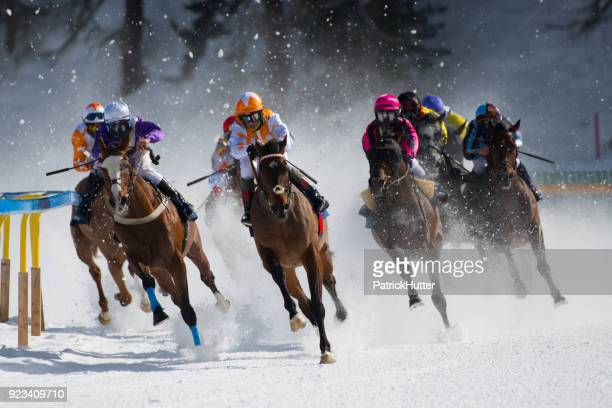 white turf st. moritz - jockey stock pictures, royalty-free photos & images