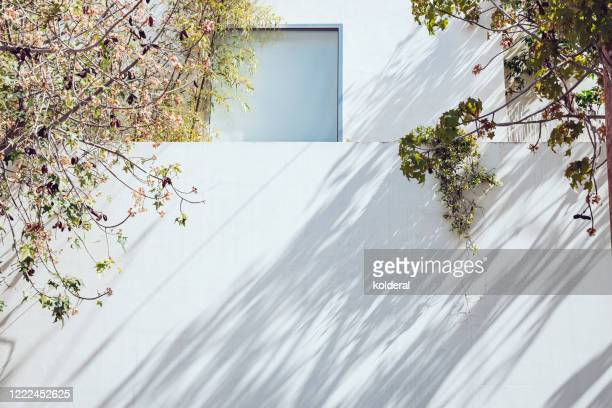 white wall at midday with tree shadow - midday stock pictures, royalty-free photos & images