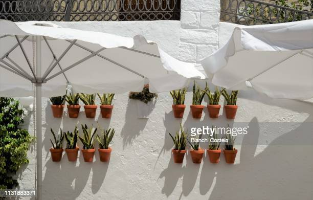 White wall decorated with plants and flowers in Vejer de La Frontera