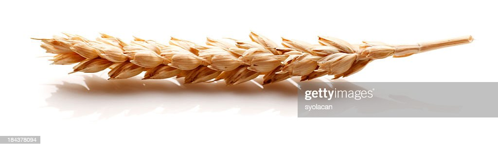 White Wheat ear : Stock Photo