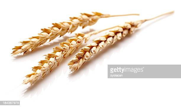 White Wheat ears