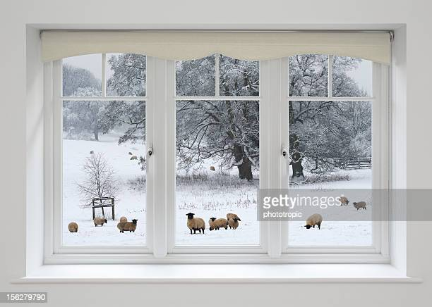 white windows and sheep in snow - window frame stock pictures, royalty-free photos & images