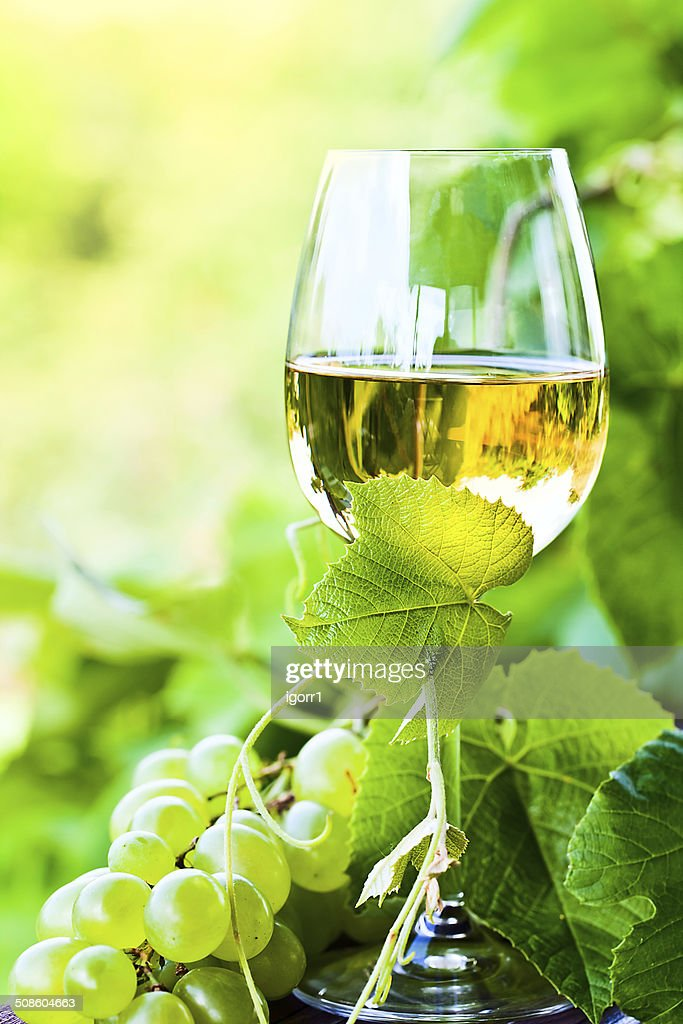 white wine in vineyard : Stock Photo
