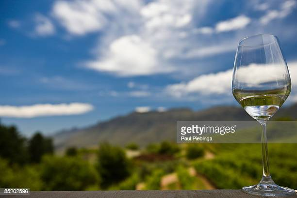 white wine - wineyard stock photos and pictures