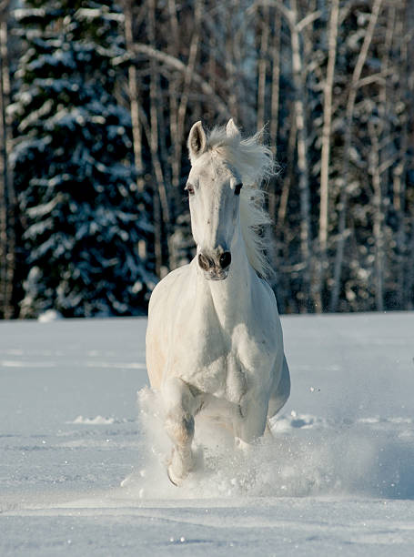 White Winter Horse Wall Art