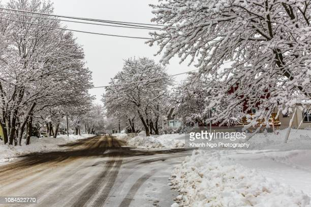 white winter, snow day in new brunswick, canada. - khanh ngo stock pictures, royalty-free photos & images