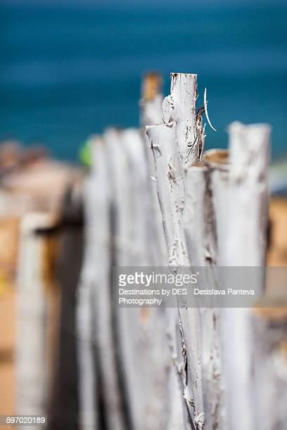 White wooden sticks