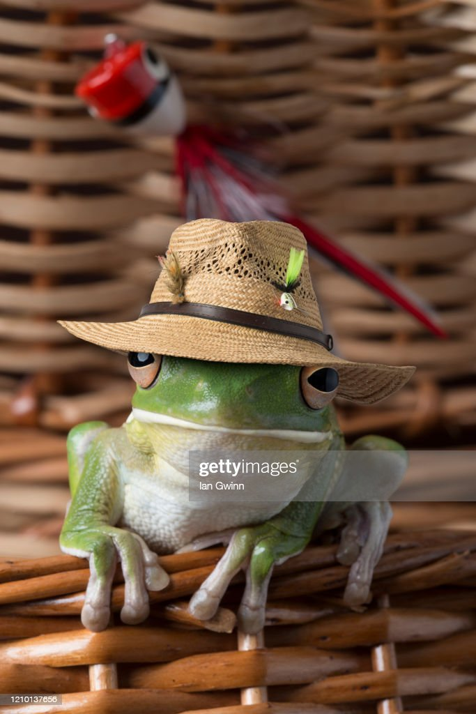 White-Lipped Treefrog in Fish Basket : Stock Photo
