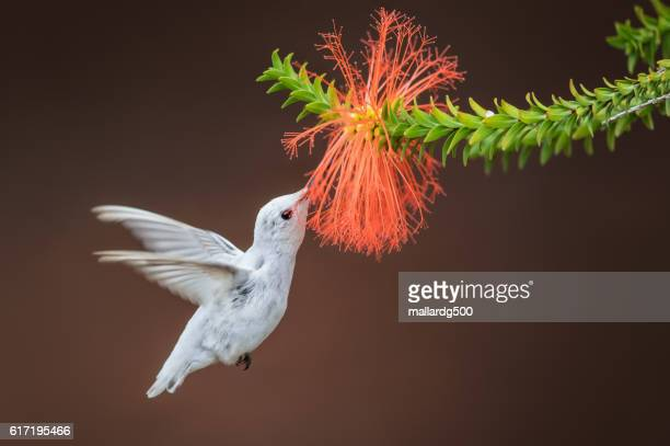 a whiter shade of pale - albino stock pictures, royalty-free photos & images
