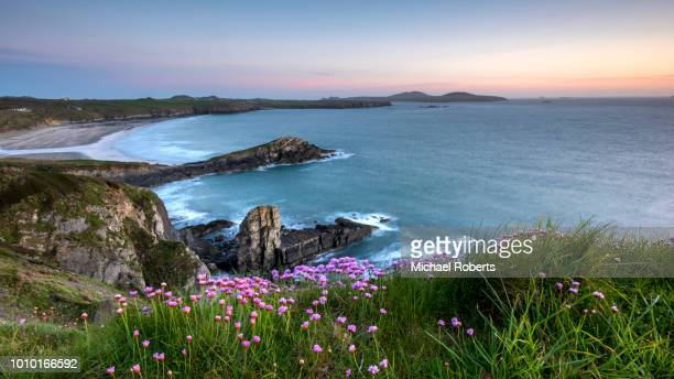 whitesands bay on the pembrokeshire coast path at sunset near st davids, wales - wales stock-fotos und bilder