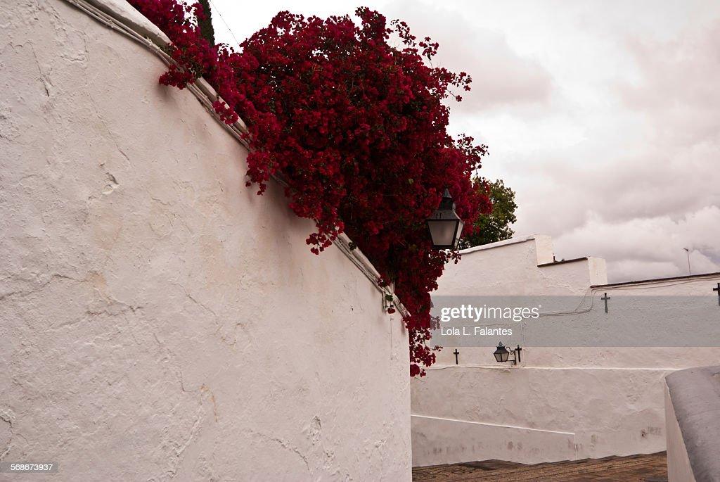 Whitewashed wall : Stock Photo