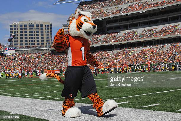 Who Dey the Cincinnati Bengals mascot entertains the crowd during the game against the Green Bay Packers at Paul Brown Stadium on September 22 2013...
