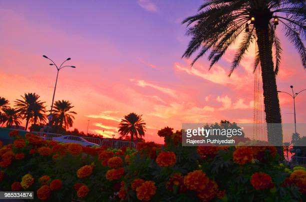 who have the  best color with sun or flower - who stock pictures, royalty-free photos & images